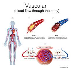 Terapia vascular física